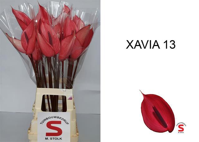 <h4>ANTH A XAVIA</h4>