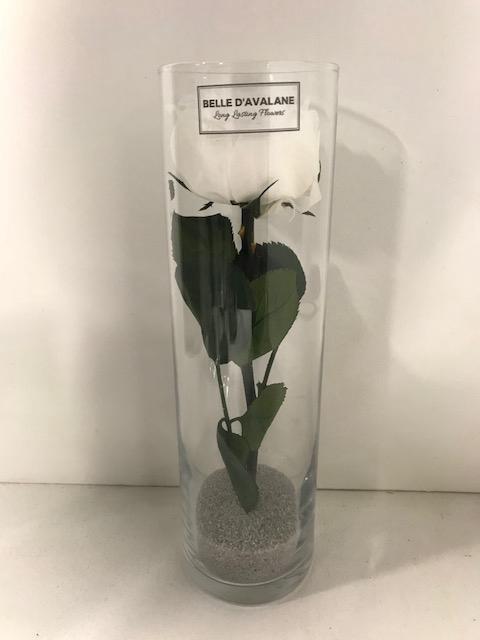 <h4>Glas met tuinroos Wit d6.5x23cmh</h4>