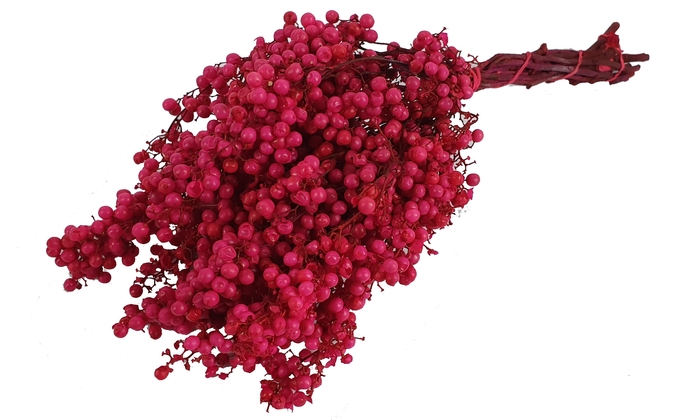 <h4>Pepperberries per bunch in poly cerise</h4>