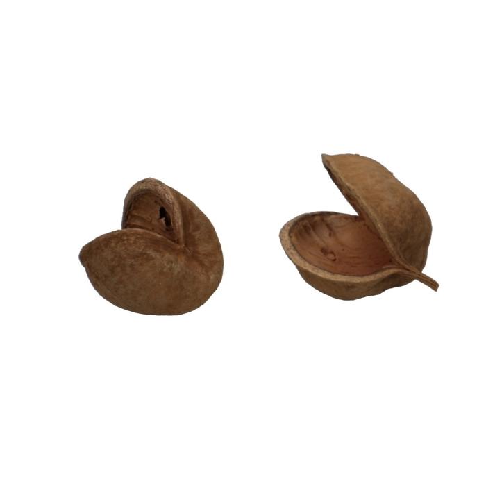 <h4>Dried articles Budha-nuts x5</h4>
