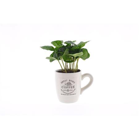 <h4>Coffea Arabica Keramiek Koffiemok Wit</h4>