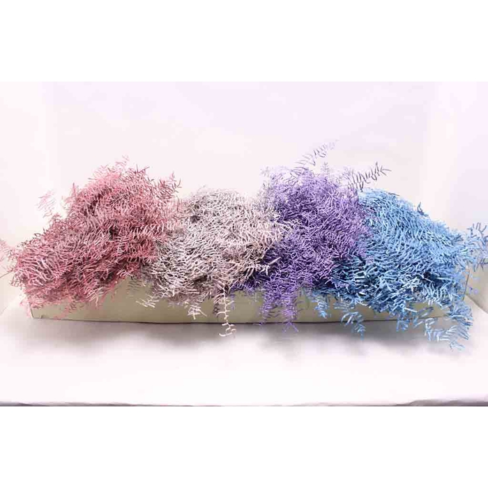 <h4>Coralfern preserved 10st per bunch mixed Colours Metalic</h4>