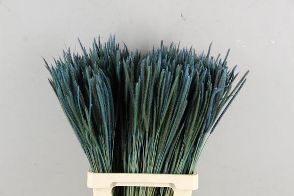 <h4>Df Carmen Grass Light Blue 50g</h4>