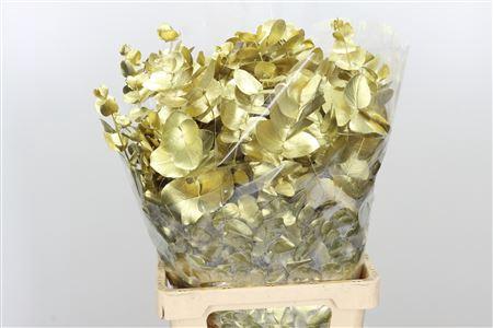 <h4>Dec Cynerea Gold</h4>