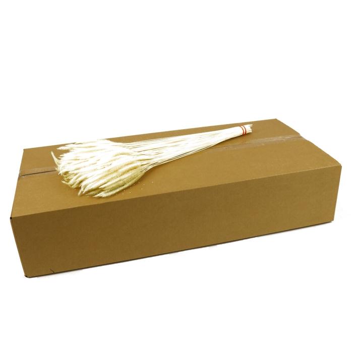 <h4>Droogbloem/doos Worms Grass 50cm</h4>
