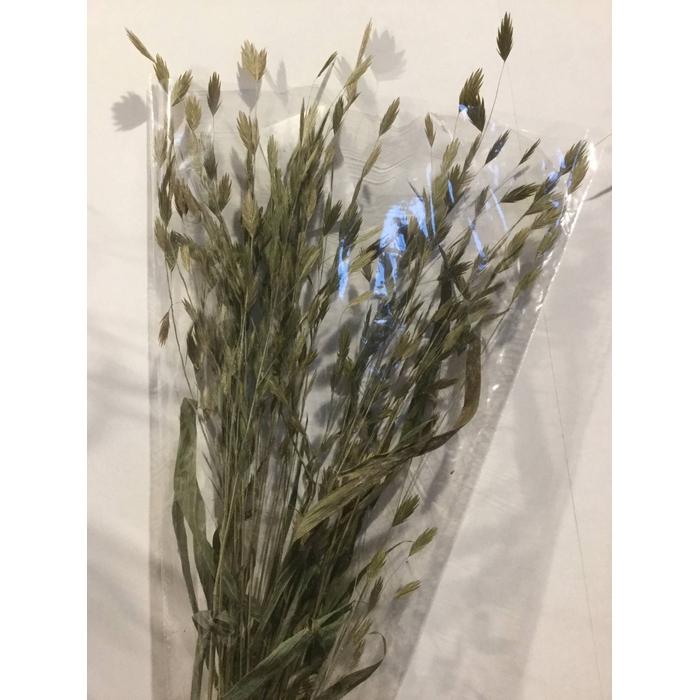 <h4>DRIED FLOWERS - CHASMANTIUM 30PCS</h4>