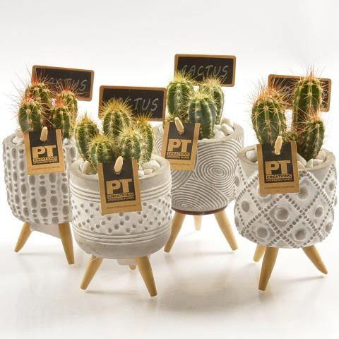 <h4>PTCT9861 Arrangementen Cactus</h4>