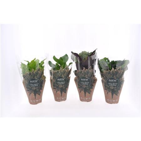 <h4>Ov Kamerplanten Gemengd Potcover</h4>