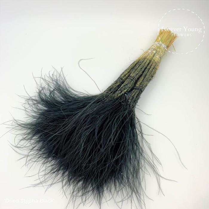 <h4>Dried Stypha Black</h4>