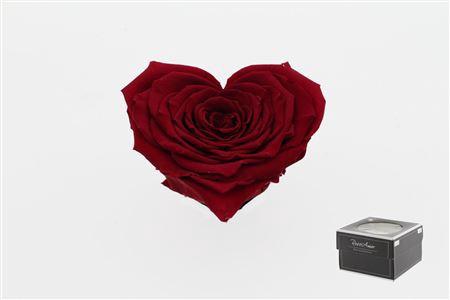 <h4>Pr 5.2 Heart Red-01 Xxl</h4>