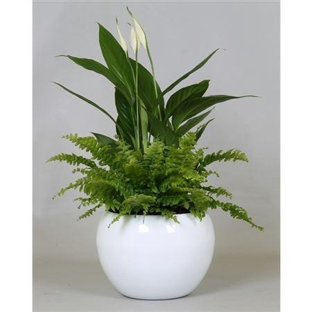 <h4>Opm Spathiphyllum Keramiek Bolschaal</h4>