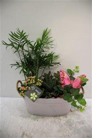 <h4>2068 Witte Teil Plants X4</h4>