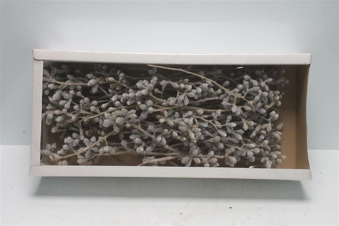 <h4>Mushroom Gum Branch White Washed (50 St)</h4>