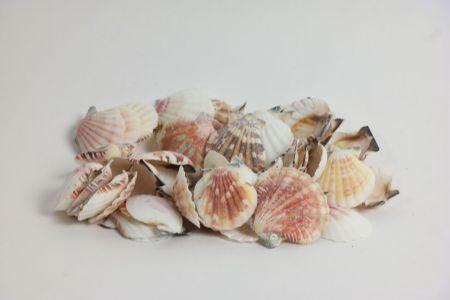 <h4>Basic Vexillum Shell 300gr</h4>