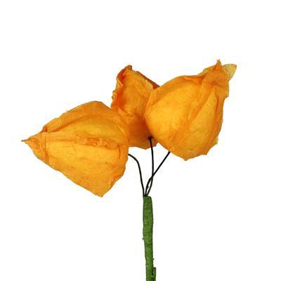 <h4>Bijsteker physalis 3x4cm + 50cm stok oranje</h4>