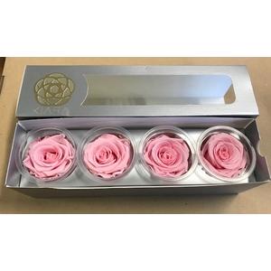 Rose Bridal Pink Super(4)