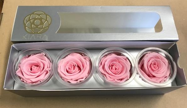 <h4>Rose Bridal Pink Super(4)</h4>