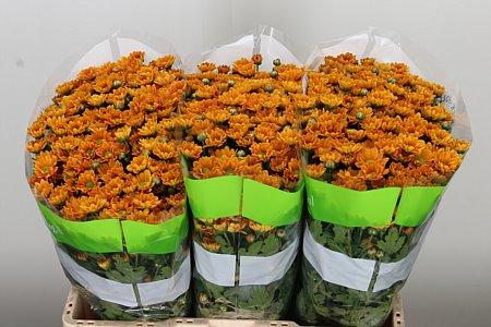 <h4>Chr San Rossi Orange</h4>
