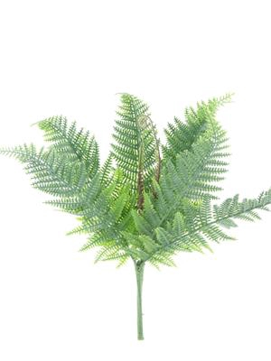 <h4>Af Fern Bush Boston</h4>