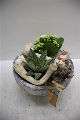 <h4>Terra Cotta Aloe</h4>