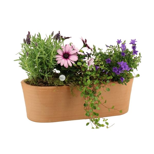 <h4>Outdoor zomer arrangement</h4>