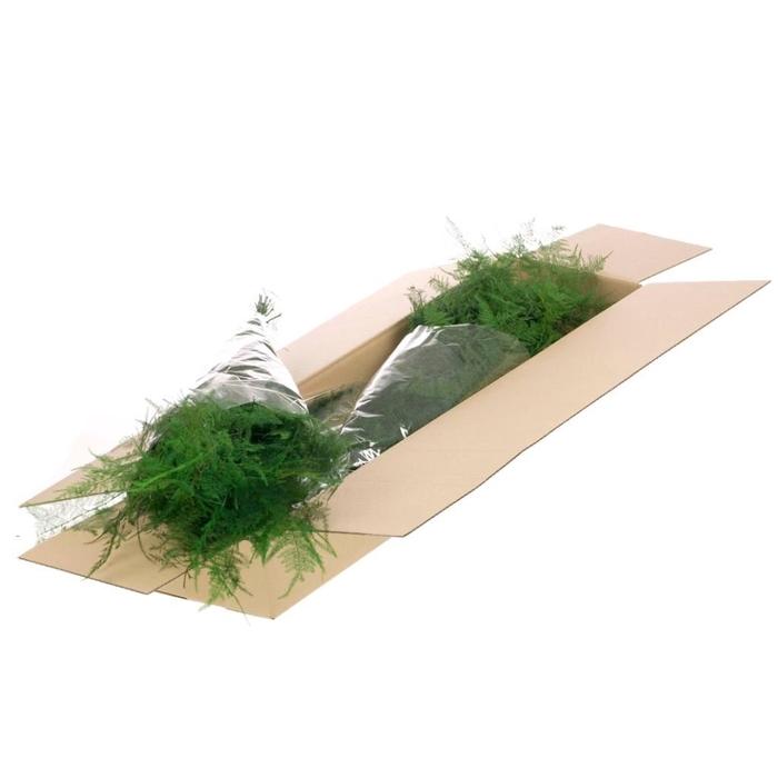 <h4>Asparagus preserved SB moss green</h4>