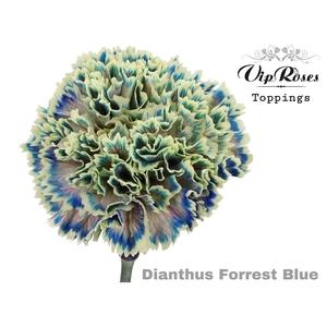 DI ST FORREST BLUE
