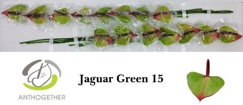 <h4>ANTH JAGUAR GREEN 15.</h4>