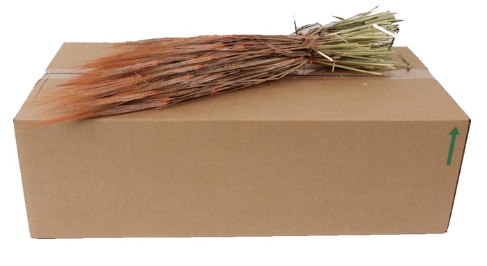 <h4>Hordeum per bunch Orange</h4>
