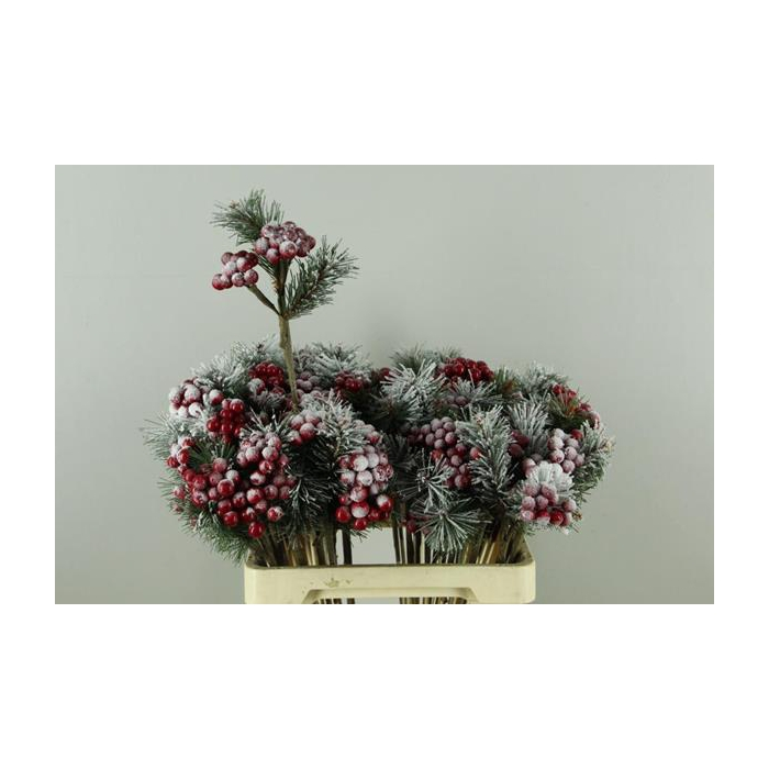 <h4>Stick Berries Red/pinus+snow</h4>