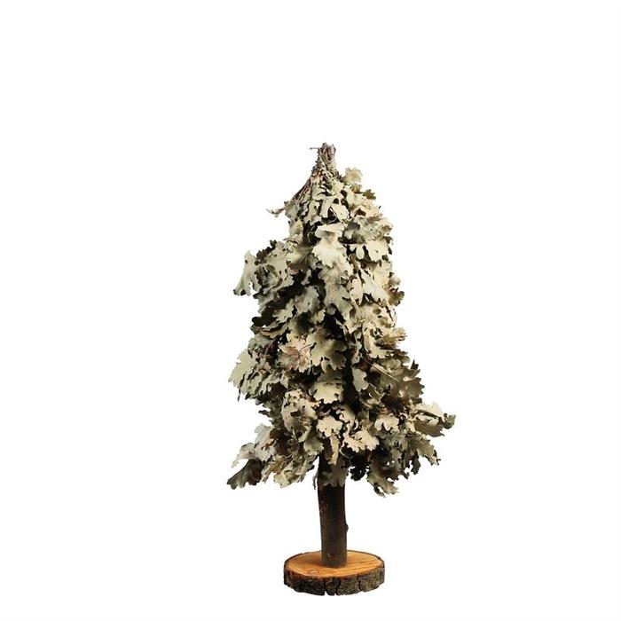 <h4>TREE MINI OAK 60CM NAT. GREEN</h4>