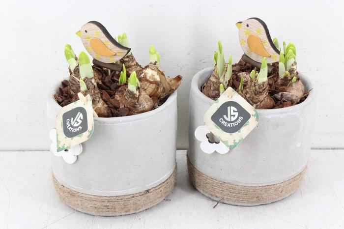<h4>arr.. Narcis JS - Ker. pot grijs bloem touw</h4>