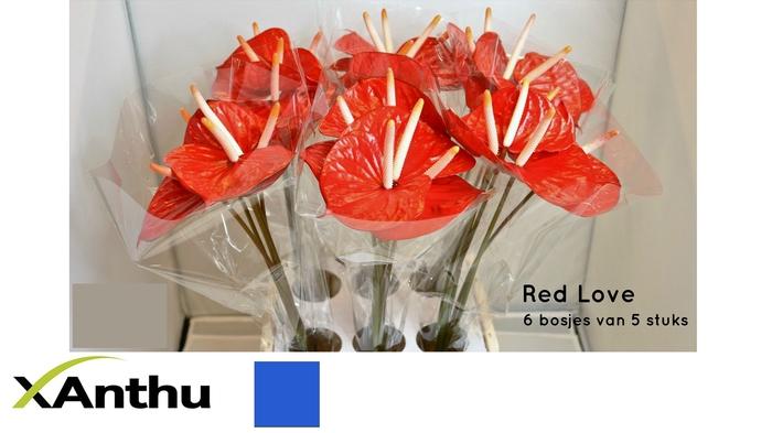 <h4>ANTH A RED LOVE</h4>