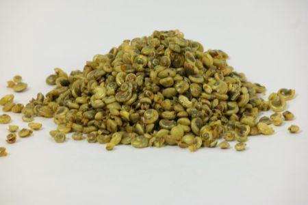 <h4>Basic Shell Umbonium 200gr</h4>