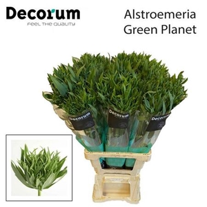 Alstr Green Planet