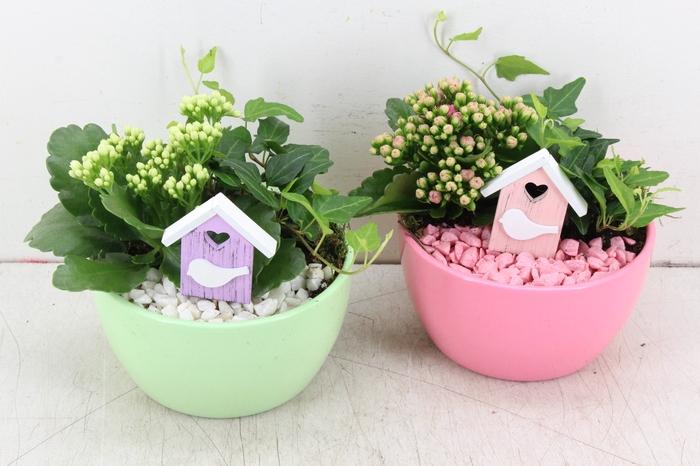 <h4>arr. PL - Keramiek bolpot groen roze</h4>