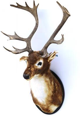 <h4>Deer Head 138cm Brown/red</h4>