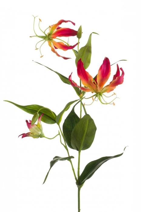 <h4>Silk Gloriosa 75cm spray</h4>
