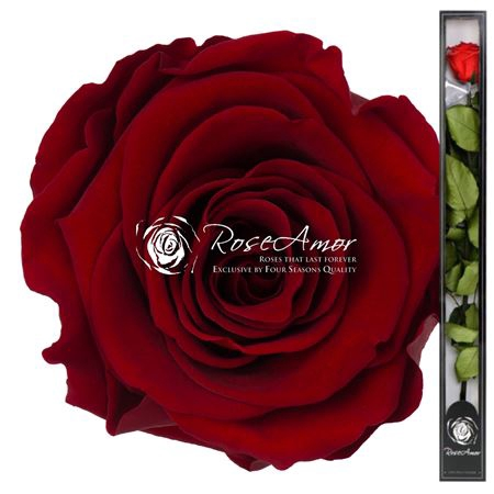 <h4>70cm Stem Red01</h4>