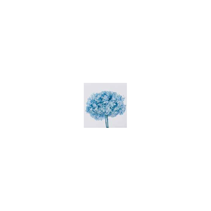 <h4>Hydrangea / Hortensia Azul Pastel HRT/0630</h4>