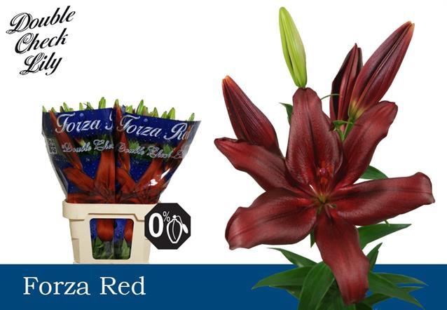 <h4>LI LA FORZA RED</h4>