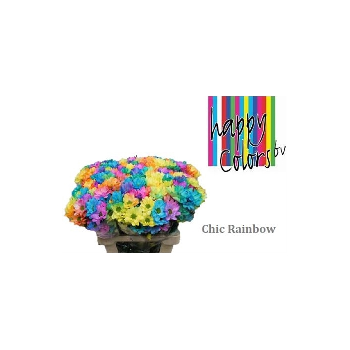 <h4>Chr T Chic Rainbow</h4>