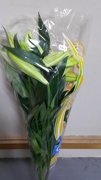 <h4>Lilium longiflorum 1 bud</h4>