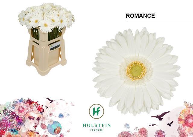<h4>GE GR ROMANCE</h4>