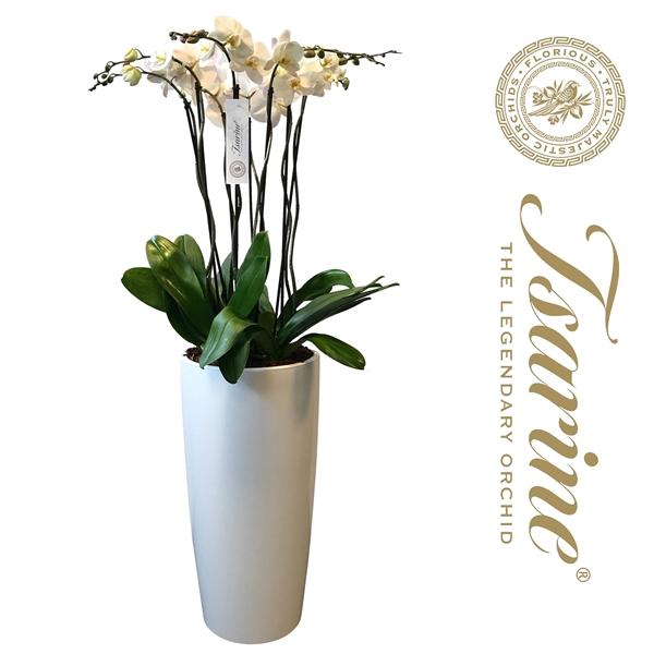 <h4>Tsarine® Nr35 Wit Grand Deco XXL</h4>