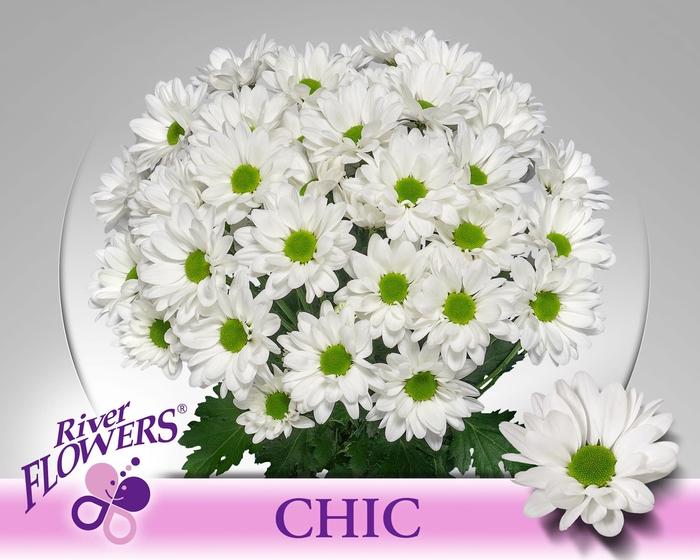 <h4>CHR T CHIC</h4>