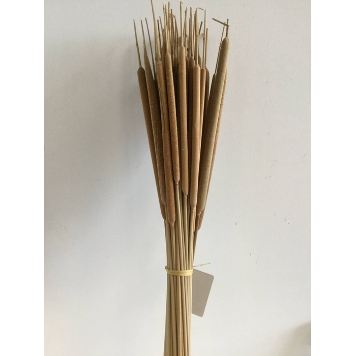 <h4>DRIED FLOWERS - TYPHA NATURAL 50PCS</h4>