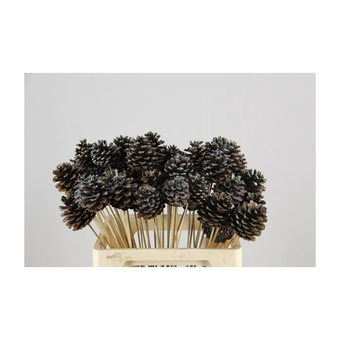 <h4>Stick Pine Cone Natural+glittr</h4>