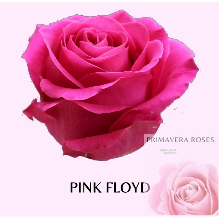 <h4>R GR PINK FLOYD</h4>