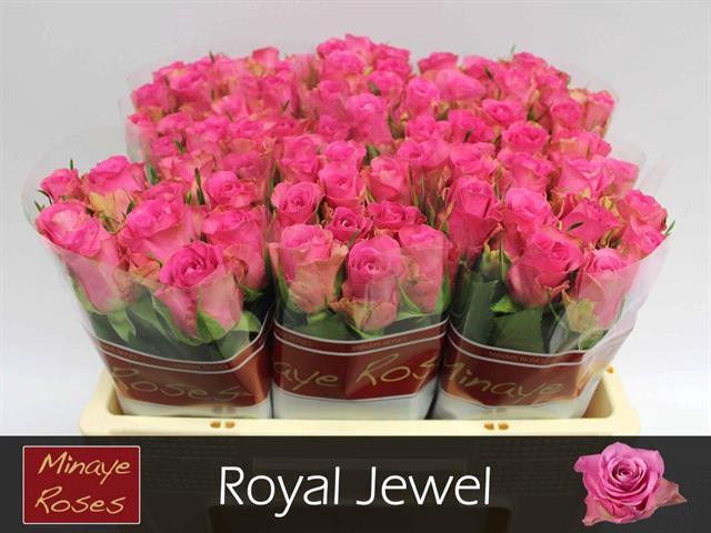 <h4>R GR ROYAL JEWEL</h4>